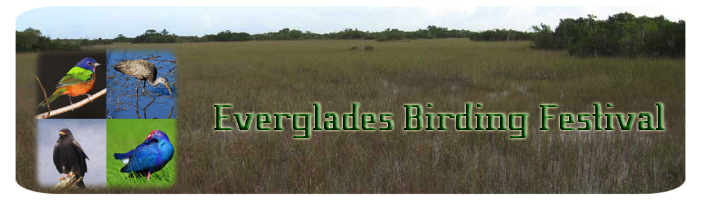To the Everglades Birding Festival