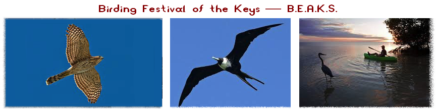 Birding Festival of the Keys - B.E.A.K.S.